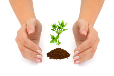 Hands and plant isolated on white background Stock Photo - 3511464
