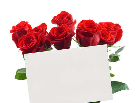 Card and roses isolated on white background photo