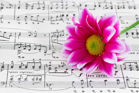 Flower on sheet music, abstract art background photo