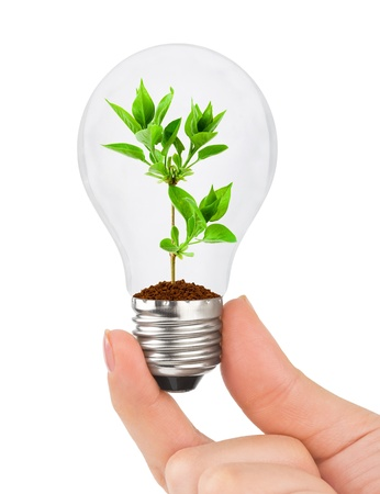Hand with lamp and plant isolated on white background photo