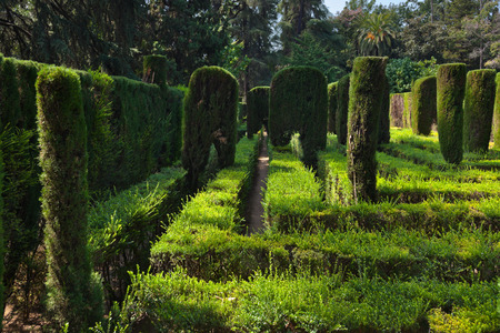 Maze at Real Alcazar Gardens in Seville Spain - nature background