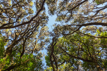 Rainforest in Garajonay National Park - La Gomera - Canary islands - Spain photo