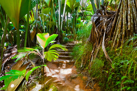 Pathway in jungle - Vallee de Mai - Seychelles - sfondo di viaggio photo