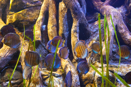Fishes and corals reef in Aquarium  photo