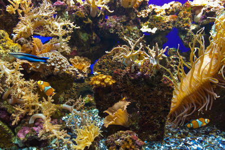 Fishes and corals reef in Aquarium - nature background photo