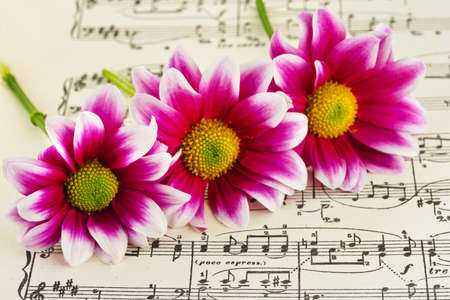 letras musicales: Flores en hoja de la m�sica - el arte abstracto de fondo