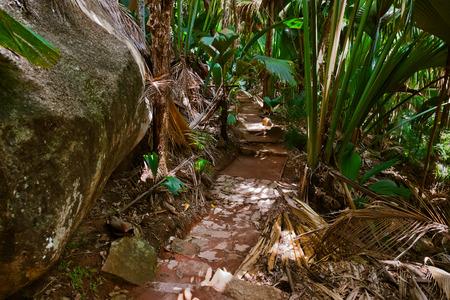 Pathway in jungle - Vallee de Mai - Seychelles - travel background photo