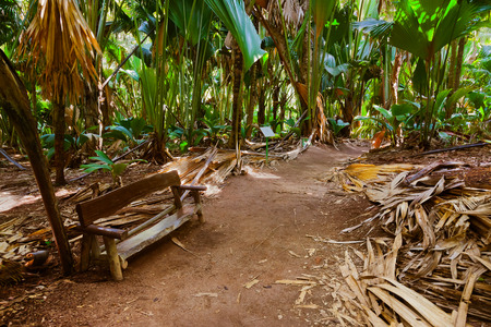 Pathway in jungle - Vallee de Mai - Seychelles - travel background photo