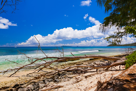 sawyer: Tropical beach at Seychelles - nature background
