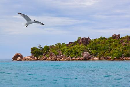 seychelles: Tropical island La Digue - Seychelles - nature background Stock Photo