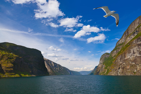 Fjord Naeroyfjord in Norway - nature and travel background photo