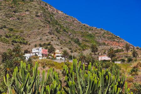 cactus flower: Cactus in La Gomera island - Canary Spain Stock Photo