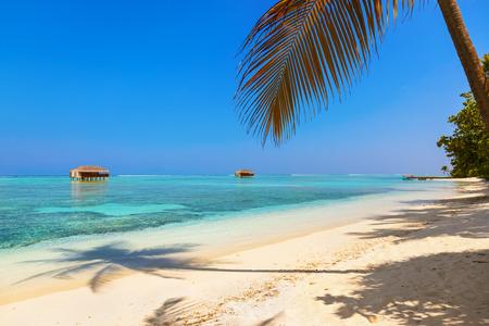palapa: Tropical Maldives island - nature travel background