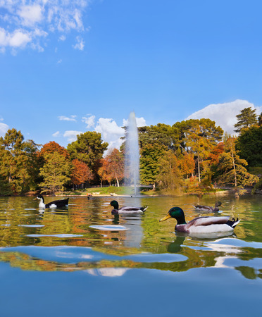 Ducks in pond near Crystal Palace - Madrid Spain photo