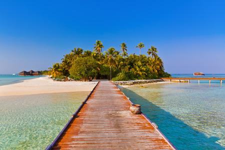 maldives island: Tropical Maldives island - nature travel background