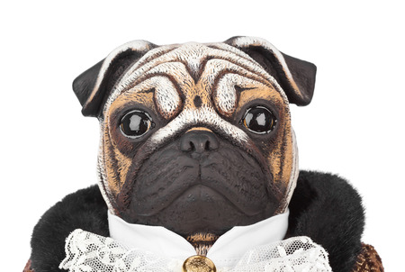 doorkeeper: Toy pug dog in butler costume isolated on white background Stock Photo