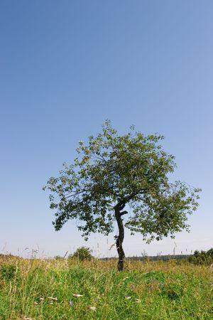 Field a tree