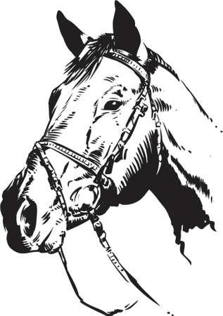 paardenhoofd: Horse hoofd