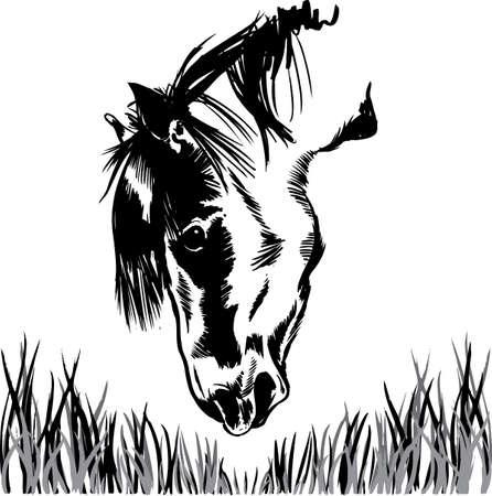 Horse feeding on grass illustration. Vector format fully editable Vector