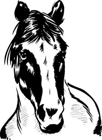 Wild horse portrait illustration. Vector format fully editable Vector