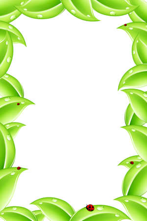 Abstract nature frame with green leafs and Ladybird Vector
