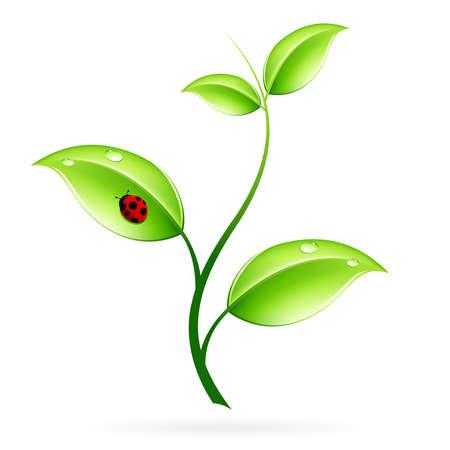 Verde de brotes con hojas y ladybird aislados en blanco Vectores