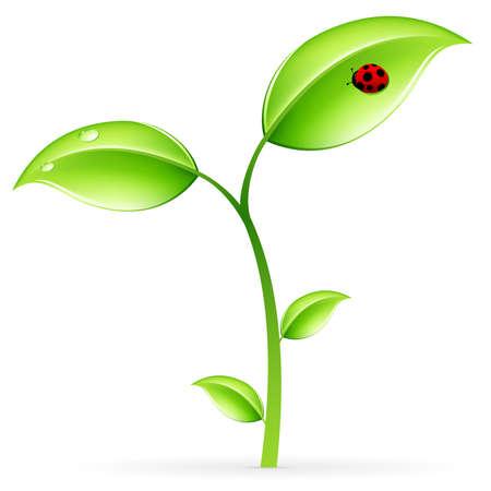 germinaci�n: Verde de brotes con hojas y ladybird aislados en blanco Vectores