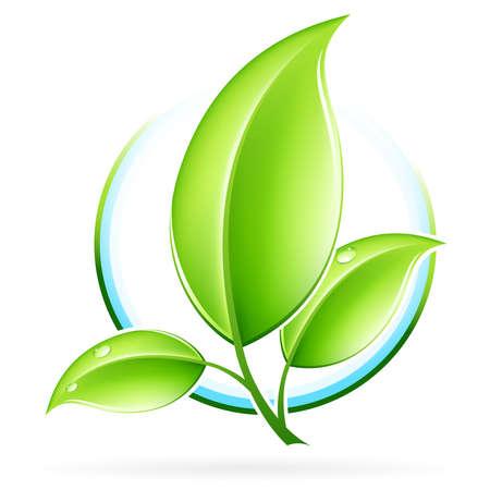 young leaf: Icono de concepto de ecolog�a verdes con hojas para el dise�o