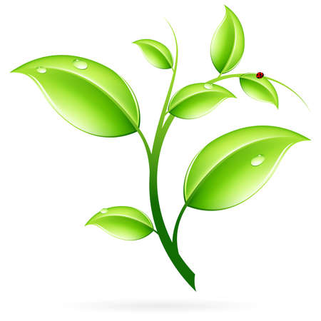 leaf logo: Green sprout with leaves and ladybird isolated on white