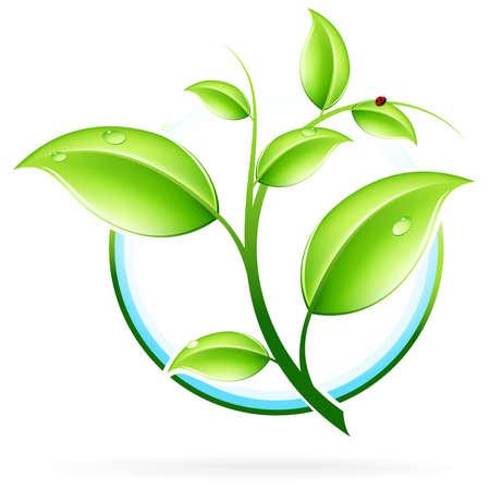plants growing: Icona del concetto ecologia verde con foglia per la progettazione  Vettoriali