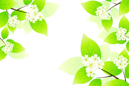florid: Green leaves and flowers isolated on white background