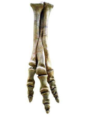 dinosaurs hand