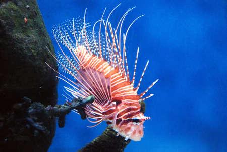 red fish Stock Photo - 890663