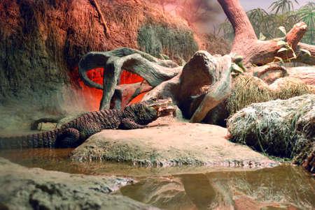 crocodile is eating a turtle photo