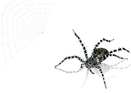 revolting: the illustration of spider Stock Photo