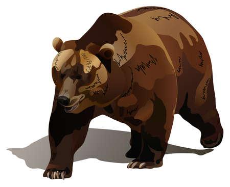 oso pardo: el oso