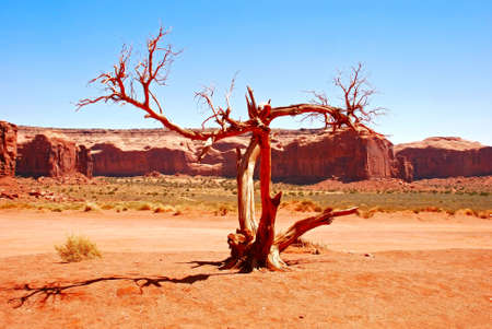dried tree in monument valley, Arizona, USA