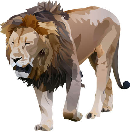 the lion Vector