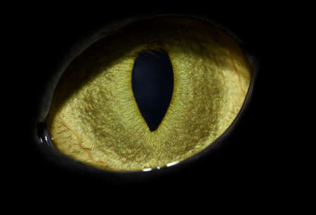 cats eye close-up with vertical pupil photo
