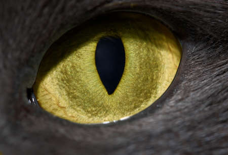 cats eye close-up with vertical pupil