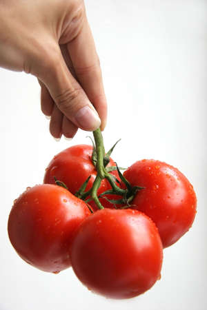 A hand holding tomatoes on a white background. photo