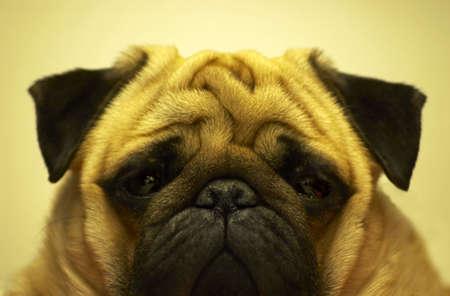 manu the dog