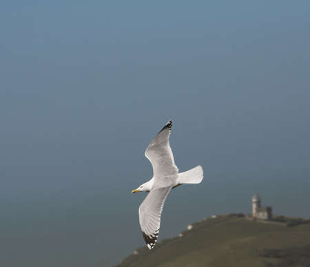 deliberately: Gull soaring about ancient wartime light-house (deliberately blurred)