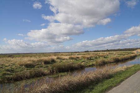 skyscape: Tierra y cielo-paisaje m�s pantanos con dique y ovejas