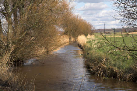 Willows leaning over a water channel in winter photo