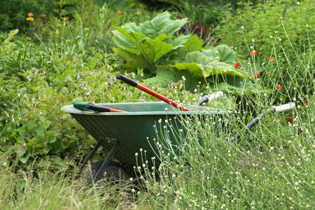 Wheelbarrow with red handled tools amidst overgrown garden