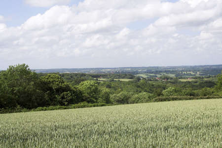 weald: View across the Sussex Weald with ripening wheat in the foreground Stock Photo