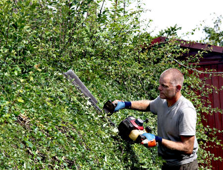Cutting a summer growth from a hawthorn hedge with a motorised cutter -