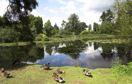 surmounted: Lake with waterlilies and duck, surmounted by pine-trees