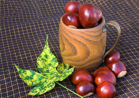 horse chestnuts: Picnic Cloth laid with Conkers or Horse Chestnuts in a wooden mug and a variegated leaf